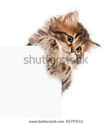 Pretty kitten peeking out of a blank sign, isolated on white background - stock photo