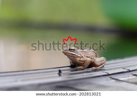 pretty little frog sitting near water - stock photo