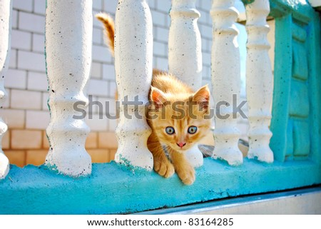 pretty little kitten with blue eyes is on the fence - stock photo