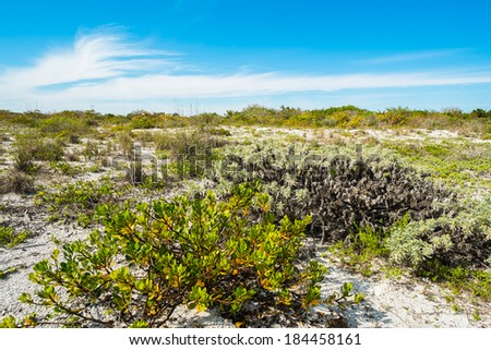 Pretty nature preserve on Sanibel Island Beach on the west coast of Florida.