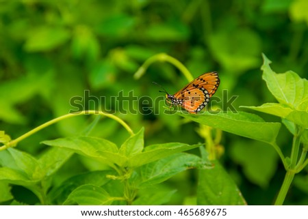 Pretty orange & black butterfly resting on a leaf.