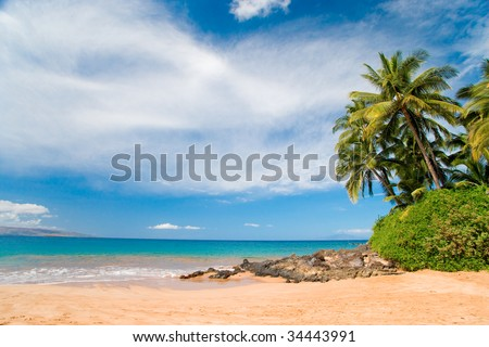 pretty palm trees on shoreline in maui hawaii - stock photo