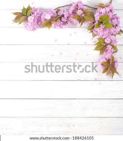 Pretty Pink Cherry Blossom Limbs on Rustic White Board Background with room or space for copy, text.  Vertical that can be horizontal with crop - stock photo