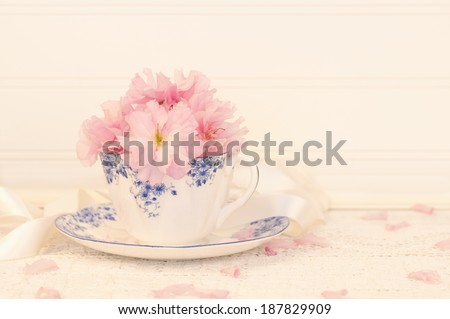 Pretty Pink Cherry Blossoms in a Tea Cup on Lace Cloth with Rustic White Wood Board Background.  Horizontal with room or space for copy, text.  Short depth of field with creamy, off white warm tones. - stock photo