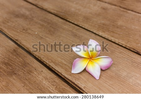 pretty pink frangipani flower, temple flower - stock photo