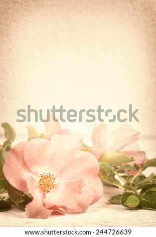 Pretty Pink Rose with Leaves on Rustic Off White Board Table with Room or Space in Background Above Top for Copy, Text, Your Words.  Vertical faded sepia vintage tone with vignette - stock photo