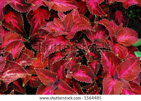 Pretty plant - stock photo