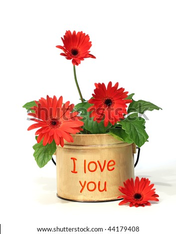 """Pretty potted daisy with """"I love you"""" on the container - stock photo"""