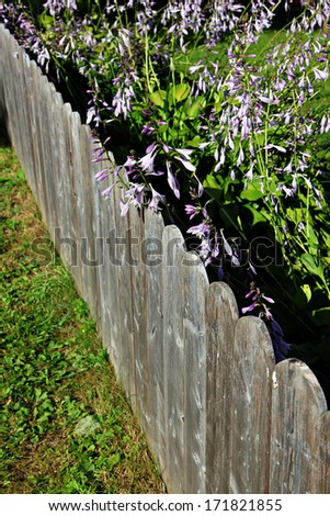Pretty Purple flowers with fence - stock photo