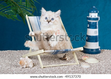 Pretty Ragdoll kitten on deckchair on fake beach with toy lighthouse and shells - stock photo