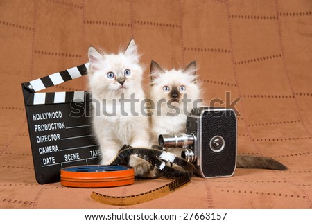 Pretty Ragdoll kitten with movie clipboard, vintage film camera, reel of film, on brown suede background - stock photo