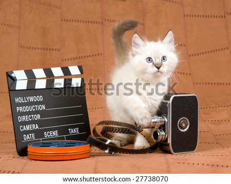Pretty Ragdoll kitten with vintage film camera, clapperboard, reel of film, movie clipboard, on brown suede - stock photo