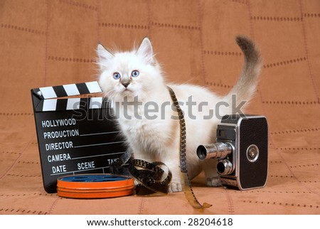 Pretty Ragdoll kitten with vintage film camera, reel of film and clapperboard on brown suede background - stock photo