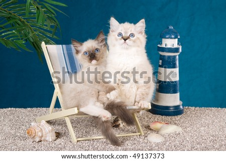 Pretty Ragdoll kittens on deckchair on fake beach with toy lighthouse and shells - stock photo