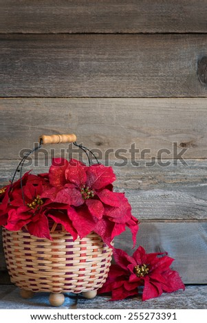 Pretty Red Christmas Poinsettia Flowers in a Basket on a Stone Surface against Rustic Wood Board Background with room or space for copy, text, your words.  Vertical - stock photo