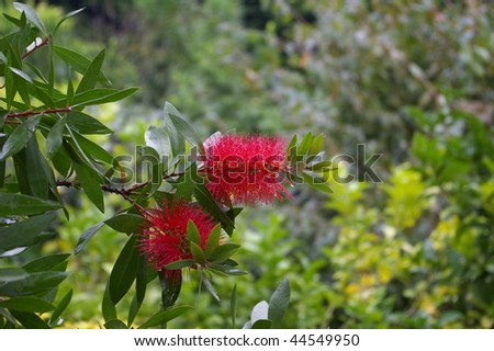 Pretty red flowers in a green background