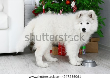 Pretty Samoyed dog with metal bowl in room with Christmas tree on background - stock photo