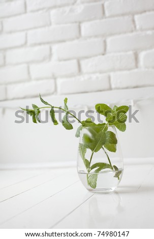 pretty scene of fresh mint in a vase in a white kitchen - stock photo