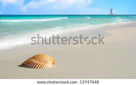 Pretty seashell on beach with sailboat and clouds in distance - stock photo
