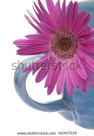 Pretty spring close up of a purple gerber daisy in a blue coffee mug.