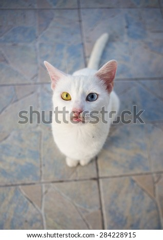 Pretty sweet cat with different eyes. Especially do not like it - stock photo
