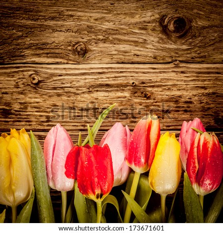 Pretty tulip border in colourful red, yellow and pink on a vintage textured wood in square format with copyspace - stock photo