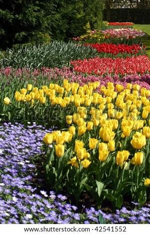 Pretty tulip garden - stock photo