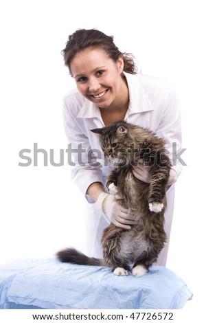 Pretty vet and feline subject.  Veterinarian have a  medical examination a cat. White background. - stock photo