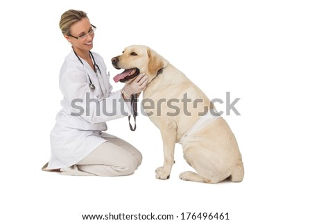 Pretty vet petting yellow labrador dog on white background