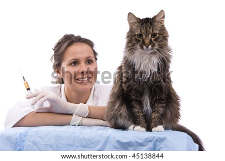 Pretty vet with syringe is looking at the feline subject.  Veterinarian have a  medical examination a cat. White background.