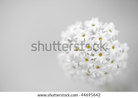 Pretty white flower growing on the bank of the Colorado River - stock photo