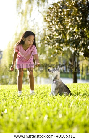 Pretty young Asian girl training Alaskan Klee Kai puppy to sit - stock photo