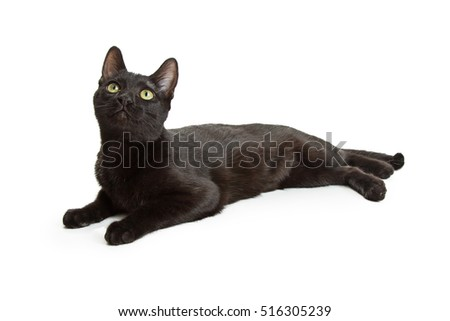 Pretty young black cat lying down to side on white looking up