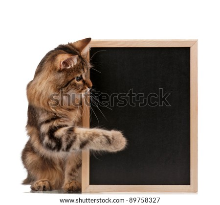 Pretty young cat with a blackboard over white background - stock photo