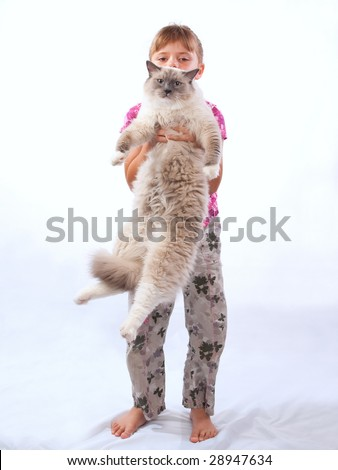 Munchkin Cross Sphynx Bambino Cat Stock Photo 67438027