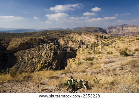 Prickly Pear Cactus above Tortilla Flats Canyon in Tonto National Forest - stock photo