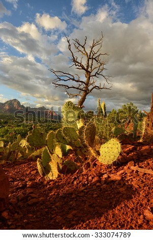 Prickly pear cactus and cypress tree growing at Airport Vortex in Sedona, Arizona - stock photo