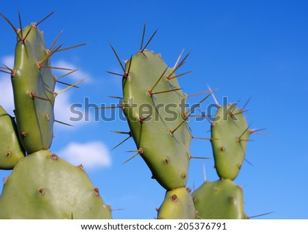 Prickly pear cactus leaves against blue sky. - stock photo