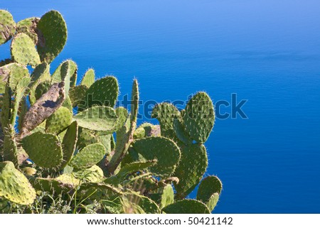 prickly pear on blue sea; typical sicilian view