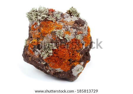 Primitive life on volcanic rock - stock photo