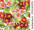 Primrose (primula) - spring flowers. Seamless floral pattern. Watercolor  - stock photo