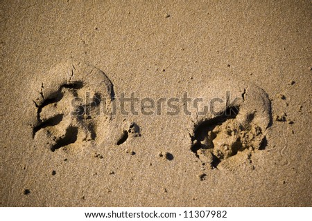 prints made on the wet sand