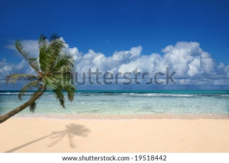 Pristine Beach With Palm Tree in Hawaii - stock photo