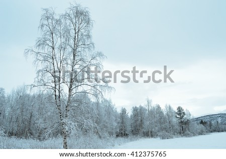 pristine snowy white forest landscape after hoarfrost - stock photo