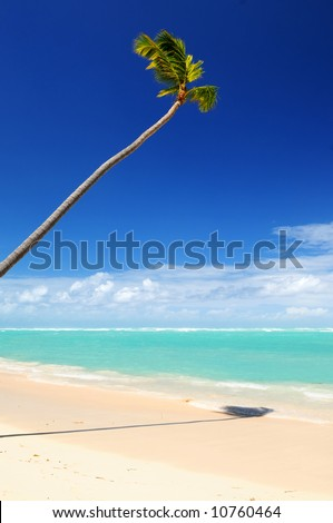Pristine tropical beach with palm tree in Dominican Republic - stock photo