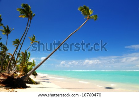 Pristine tropical beach with palm trees on Caribbean island - stock photo