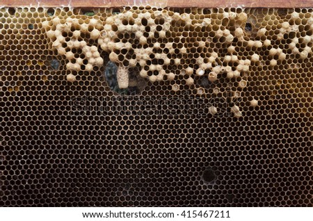 Problems in beehive: frame of laying workers brood, characterized by uneven, spotty pattern.  - stock photo