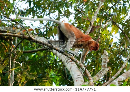 how to draw a monkey climbing a tree