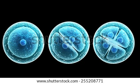 Process division of cell. Isolated on black background - stock photo