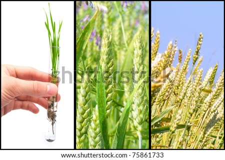 Process of selection vegetables - stock photo